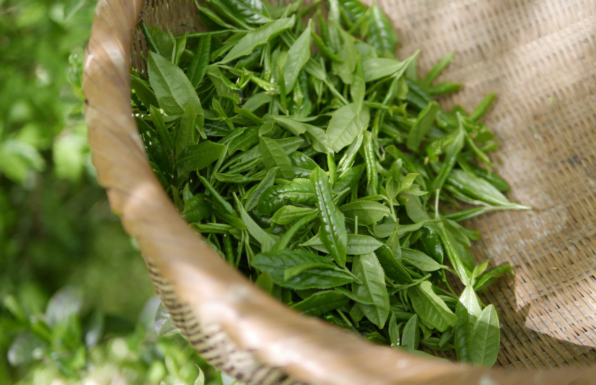 Серия для ухода за кожей с экстрактом зеленого чая